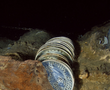 Rows of blue and white porcelain bowls are neatly stacked in the hull of the Santa Cruz junk.