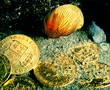 Gold coins uncovered during the excavation of the Orient. The number of pre-revolutionary coins found, including the ones bearing likeness to the French kings Louis XV and Louis XVI, attest to the toll the Revolution was taking on France's economy: The gold in these coins was valuable, offering a counter to the wild inflation that occurred after the Revolution.